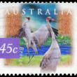AUSTRALIA - CIRCA 1997 Brolga — Stock Photo