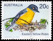 AUSTRALIA - CIRCA 1979 Eastern Yellow Robin — Stock Photo