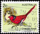 AUSTRALIA - CIRCA 1979 Crimson Finch — Stock Photo