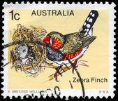 AUSTRALIA - CIRCA 1979 Zebra Finch — Stock Photo