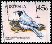 AUSTRALIA - CIRCA 1980 Masked Woodswallow — Stock Photo