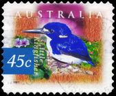 AUSTRALIA - CIRCA 1997 Little Kingfisher — Stock Photo