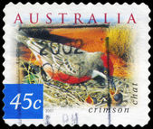 AUSTRALIA - CIRCA 2001 Crimson Chat — Stock Photo