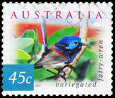 AUSTRALIA - CIRCA 2001 Variegated Fairywren — Stock Photo