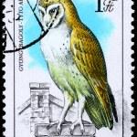 HUNGARY - CIRCA 1984 Barn Owl — Stock Photo #6257892