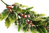 Holly berry — Stock Photo