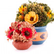 Flowers in vases — Stock Photo