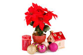 Holly berry flowers and Christmas decoration — Stock Photo