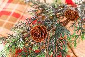 Christmas tree branch — Stock Photo