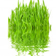 Grass and reflection — Stock Photo