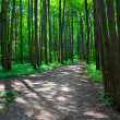 Green forest — Stock Photo #12096689