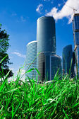 Green grass and skyscrapers — Stock Photo