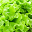 Lettuce — Stock Photo #12110397