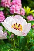 Mooie bloem — Stockfoto