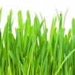 Green grass — Foto de stock #36039527