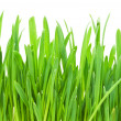 Green grass — Stock Photo #36039527