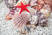 Seashells — Stock Photo