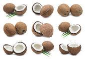 Cocos — Fotografia Stock