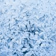 frost pattern — Stock Photo