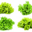 Lettuce — Stock Photo