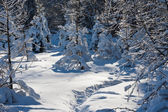 Winter forest — Foto Stock