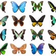 Tropical butterflies — Foto Stock