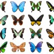 Tropical butterflies — Stock Photo