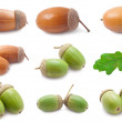 Acorns — Stock Photo #36827451