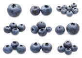 Blueberry set — Stock Photo
