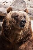 Bear — Zdjęcie stockowe
