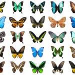 Tropical butterflies — Stock Photo #36969949