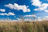 Meadow — Photo