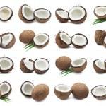 Coconuts — Stock Photo #37566893