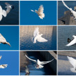 White pigeons — Stock Photo #37567037