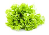 Lettuce — Stockfoto