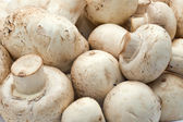 Champignon mushrooms — Stock Photo