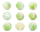 Cabbages — Foto Stock