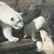 Polar bears — Stock Photo #37928823