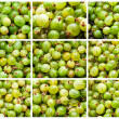 Gooseberries — Stock Photo #37946423