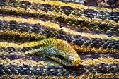 Snake — Stock Photo