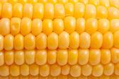 Corn — Photo