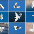 White pigeons — Stock Photo #38410881