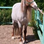 Horse — Stock Photo #38411509
