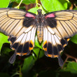 Butterfly — Stock Photo #38411563