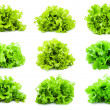 Lettuce — Stock Photo #38701159