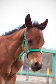 Horse — Stok fotoğraf