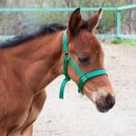 Horse — Stock Photo #38848717