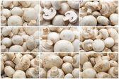 Fresh mushrooms champignon — Stock Photo