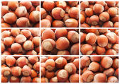 Hazelnuts or filbert nuts — Stock Photo