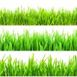 Green grass — Stock Photo #38904457